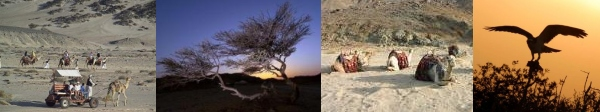 Photographs of Wadi el-Gemal National Park