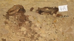 Mummified dogs from the Catacombs at Saqqara - image courtesy of the University of Cardiff