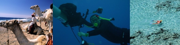 Photographs of Red Sea Coastal Resort and Diving