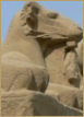 Photograph of Sphinx Avenue Luxor